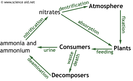 Nitrogen cycle it is more complicated than the carbon cycle