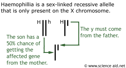 Is It Possible To Have An Autosomal Sex Linked Gene 37