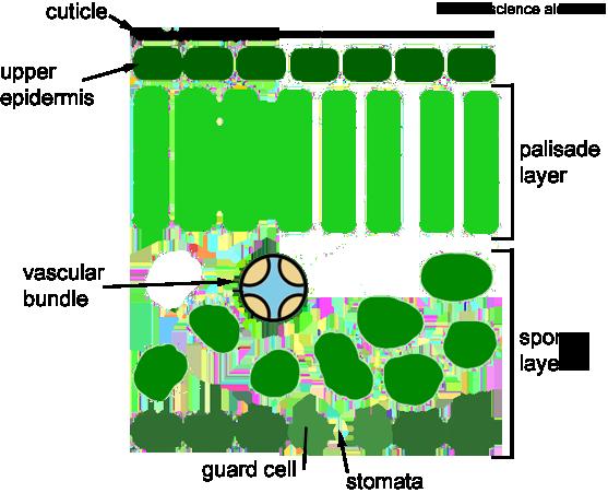 Simple Leaf Diagram